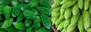 Health Benefits of Bitter Gourd-Cures Disease