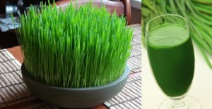 Wheat Grass Juice and Health Benefits