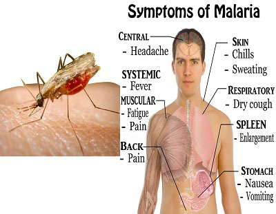 Malaria Symptoms Causes and Treatment