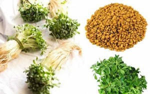 Fenugreek Seed and Leaves for Diabetes