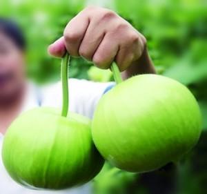 Green Gourd