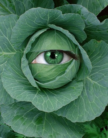 Cabbage for Wrinkle Treatment