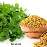 Fenugreek-Health Benefits-Cure Disease