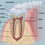 healthy-teeth-and-gums