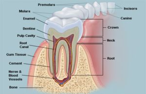 Teeth Pain and Gum Problems