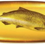 omega-3 oils and Fish oils